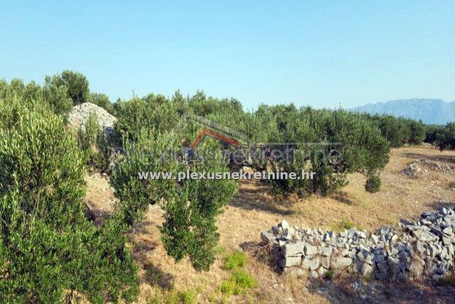Maslinik - poljoprivredno zemljište: Brač, Povlja, 4528 m2