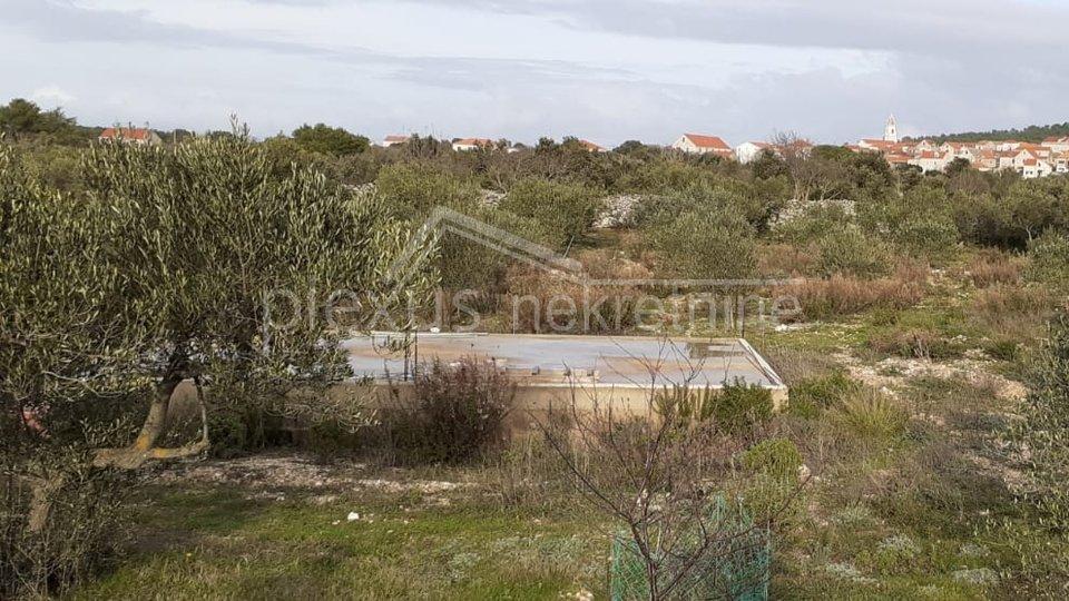 Poljoprivredno zemljište - uređeni maslinik: Šolta, Gornje Selo, 2635 m2
