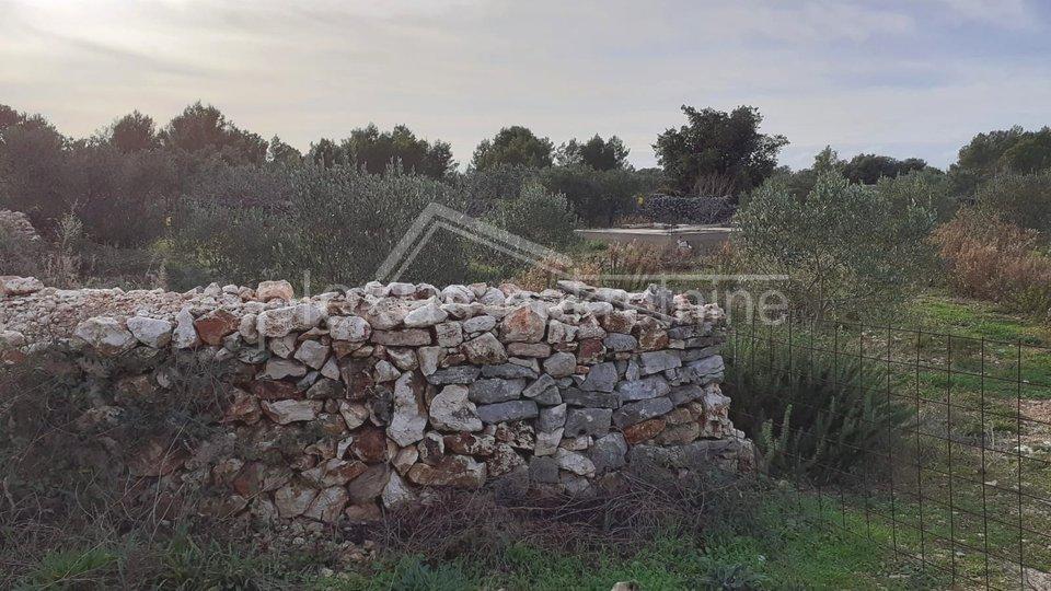 poljoprivredno zemljiste uređen maslinik šolta gornje selo